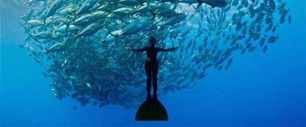 What an amazing sight! Credits to fusionfreedive.com